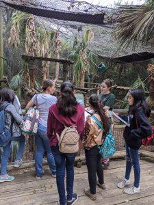 Chinquapin Burrs - Creativity Week 2020 - at the Houston Zoo
